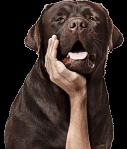 Seu pet merece receber uma manifestação de carinho que poderá ser dividida com amigos e familiares.